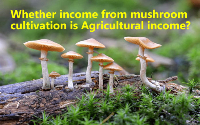 Whether income from mushroom cultivation is Agricultural income?